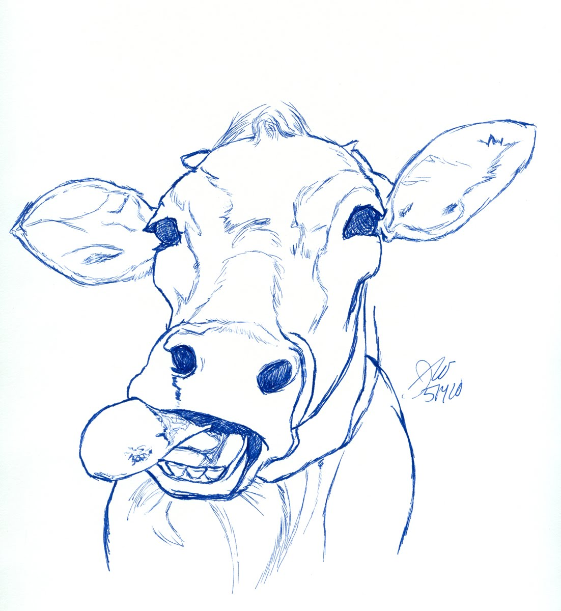 Drawn cattle realistic #12
