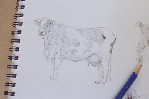 Drawn cattle realistic #4
