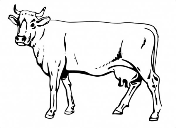 Drawn cattle realistic #9