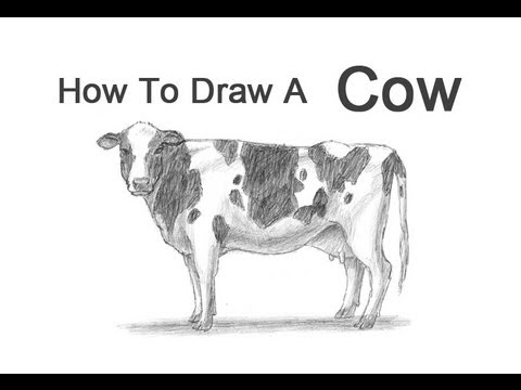 Drawn cattle realistic #6