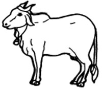 Drawn cattle sun #2