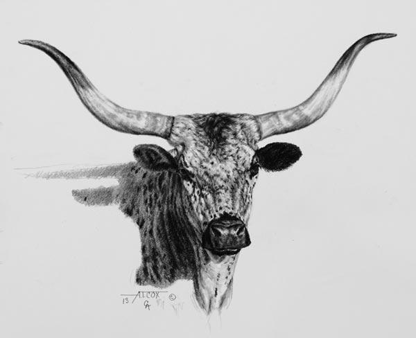 Drawn cattle sun #7