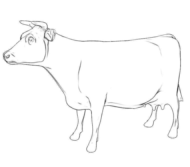 Drawn cattle sun #3