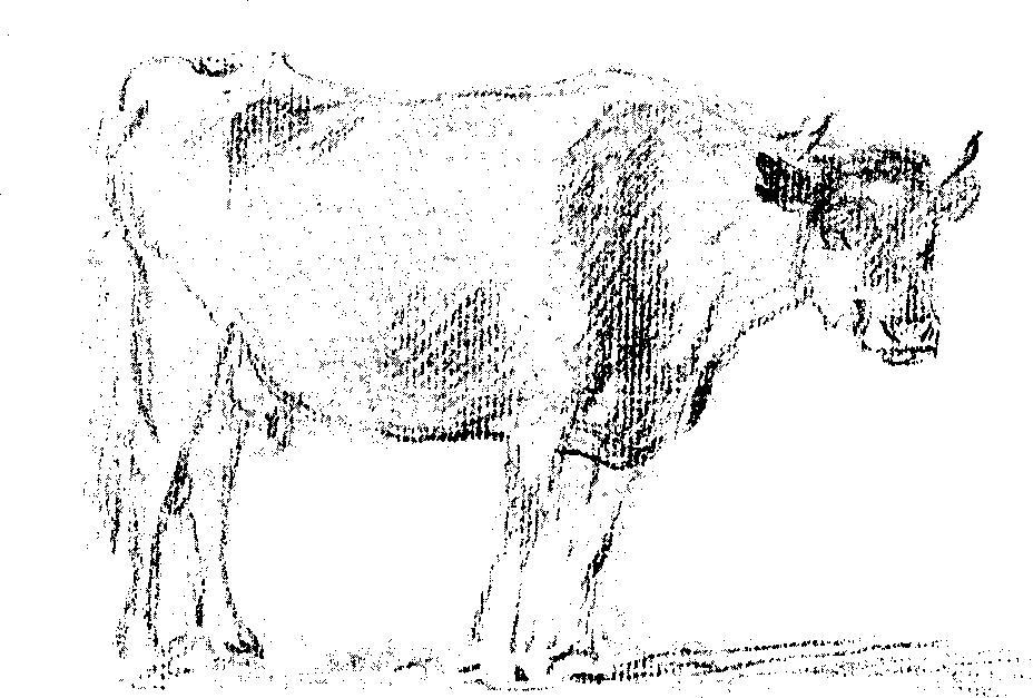 Drawn cattle trace A Origin the in a
