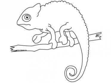 Drawn chameleon Chameleon Drawing Art Images Chameleon
