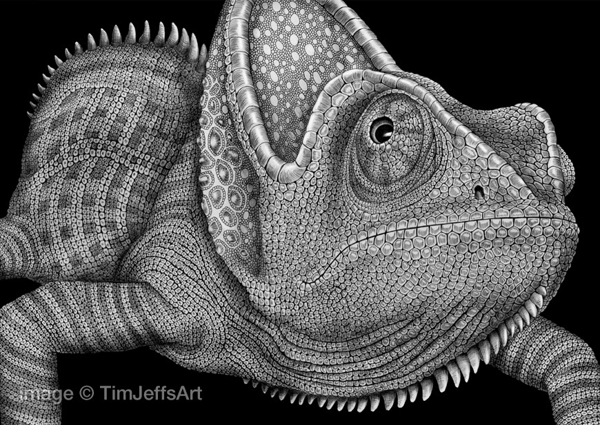 Drawn cameleon black and white Ink Ink on & Art: