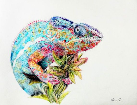 Drawn reptile colorful Pencils  drawings Chameleon Colored