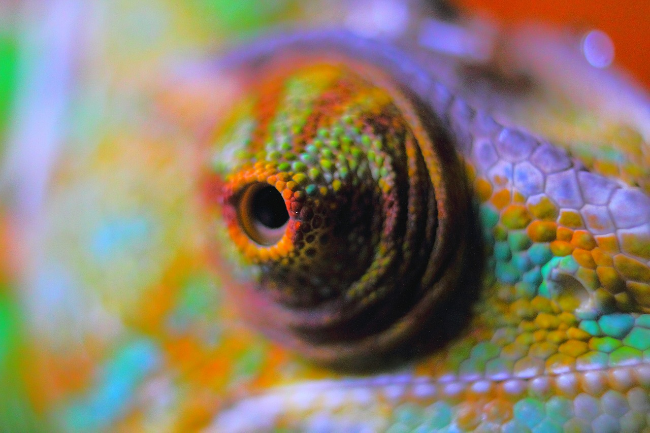 Drawn cameleon eye To Work? Pictures Facts Chameleon