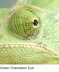 Drawn cameleon eye And games Eyes: Incredible info
