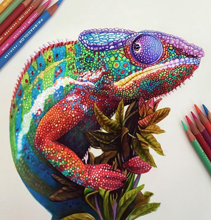 Drawn reptile colorful Drawing morgandavidsonart Tattoo on Morgan