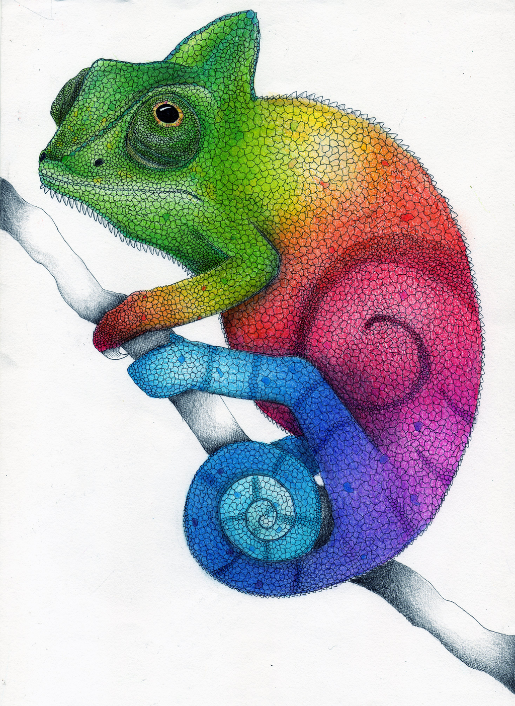 Drawn rainbow colour Pencil Pencil Drawing Chameleon by