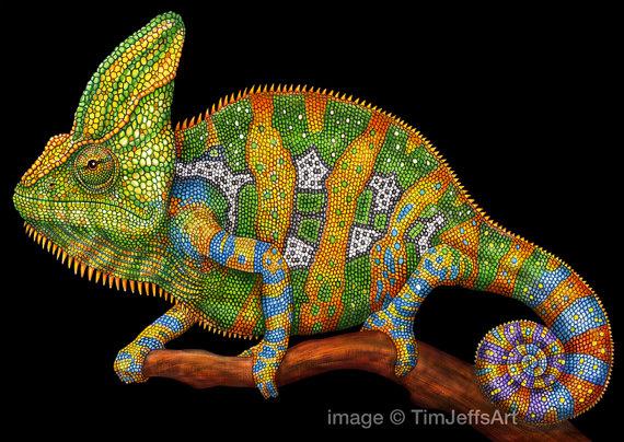 Drawn chameleon Pencils Veiled  Colored Veiled