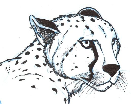 Drawn cheetah Drawing Cheetah Pic Cheetah Pencil