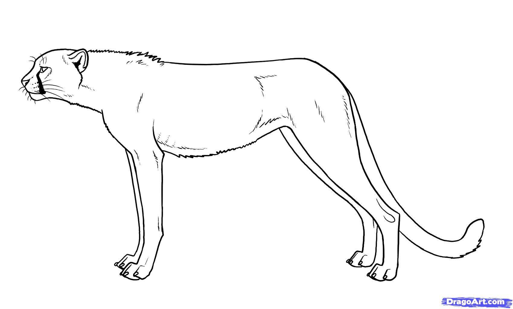 Drawn cheetah Cheetah Simple drawing photo#4 Drawing