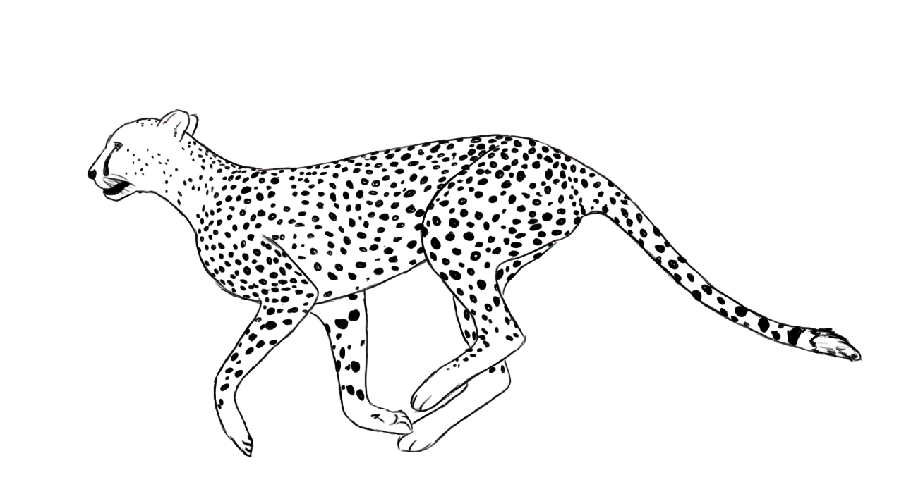 Drawn pice cheetah How To Draw Central Cheetah