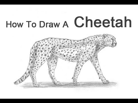 Drawn pice cheetah How to Draw Cheetah YouTube