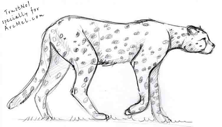Drawn pice cheetah Best Drawing Cheetah Drawing Art