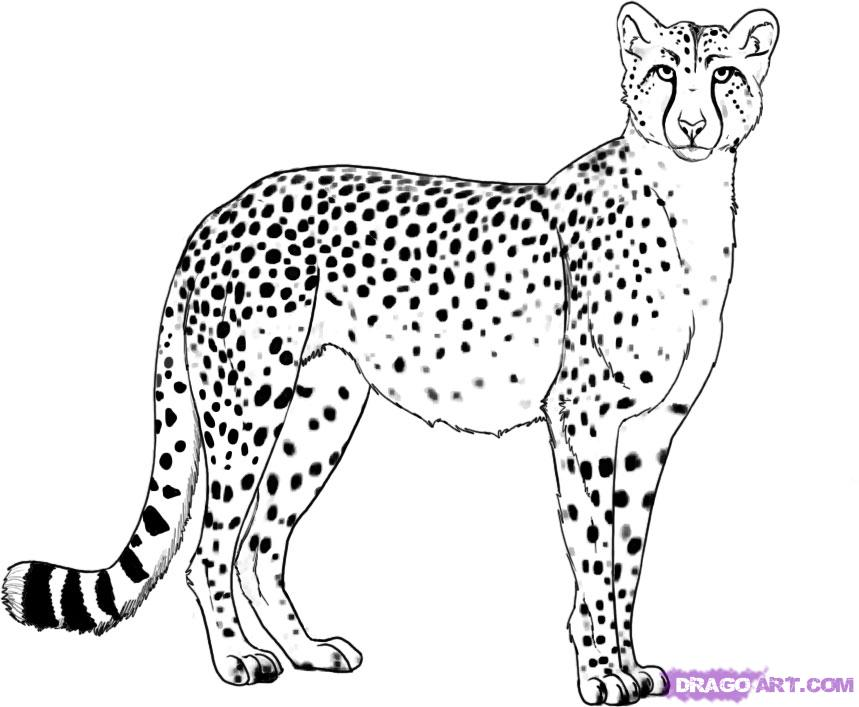 Drawn pice cheetah To Animals draw Draw a