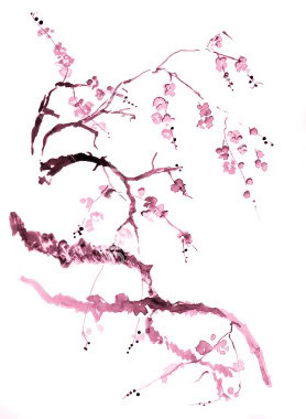 Drawn sakura blossom apricot blossom Cherry More Drawing  Blossom