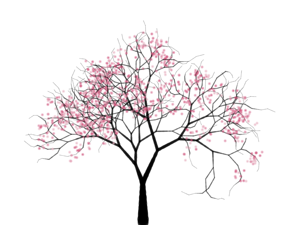 Drawn cherry blossom Of a tree a Cherry