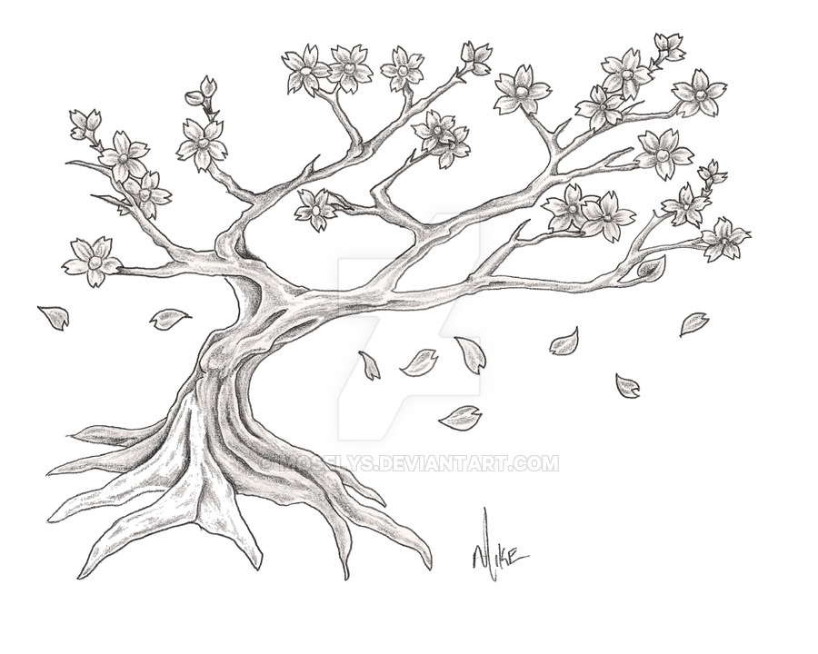 Drawn cherry blossom nice tree #15