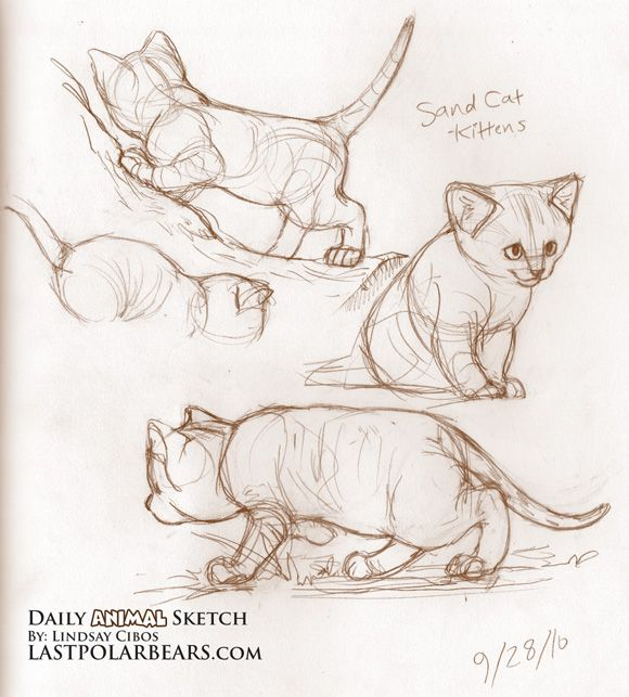 Drawn cheshire cat kitten About Domestic and Cats Find