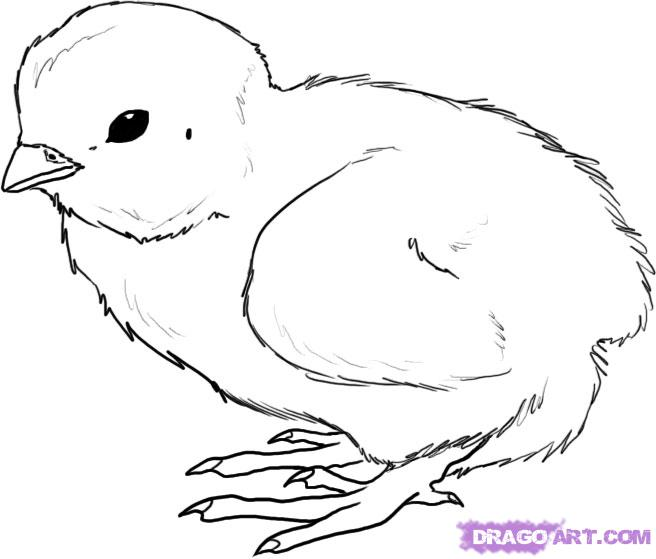 Drawn chick By Step How Free to