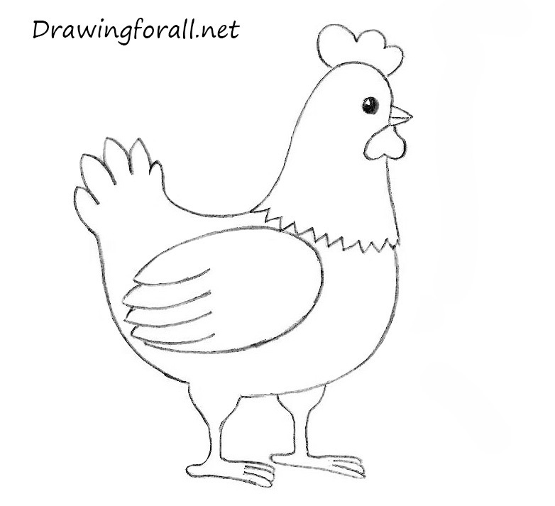 Drawn chicken For to How how net