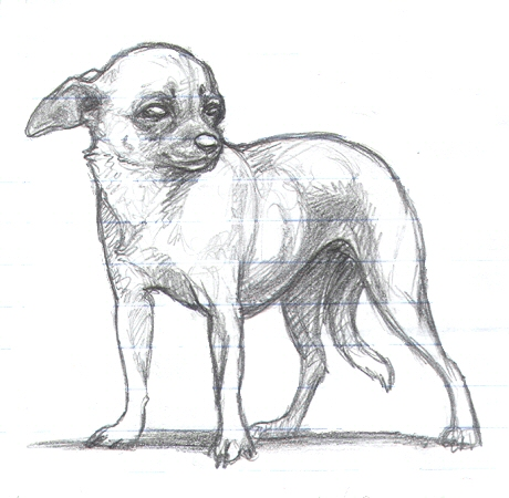 Drawn chihuahua By on DeviantArt Chihuahua nikkiburr