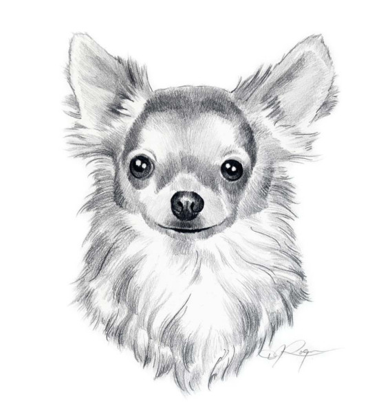 Drawn chihuahua K9artgallery Pencil Drawing COAT $12