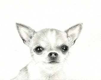 Drawn chihuahua Chihuahua art drawing available 5x7