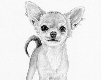 Drawn chihuahua By puppy UK Chihuahua Etsy