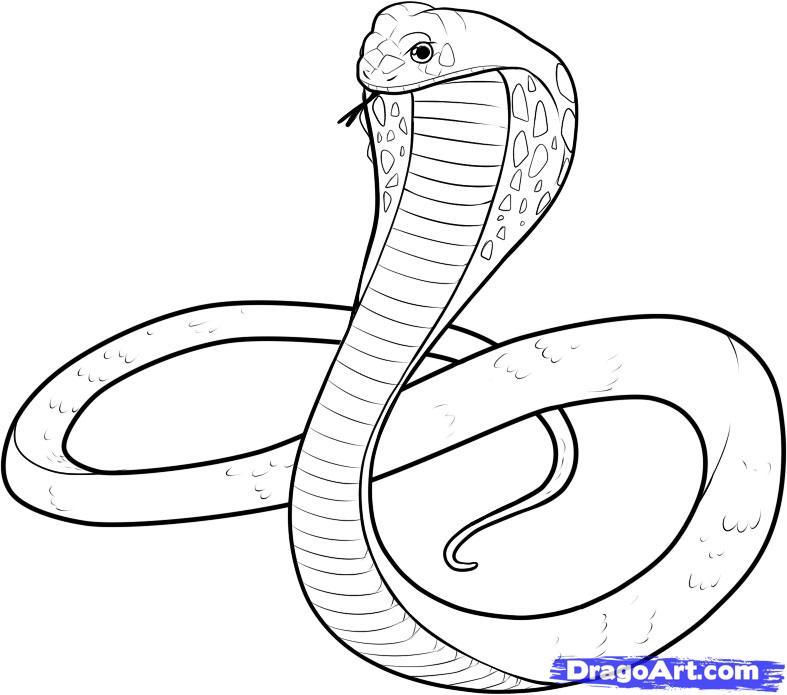 Drawn snake king cobra Free by Art Animals Free