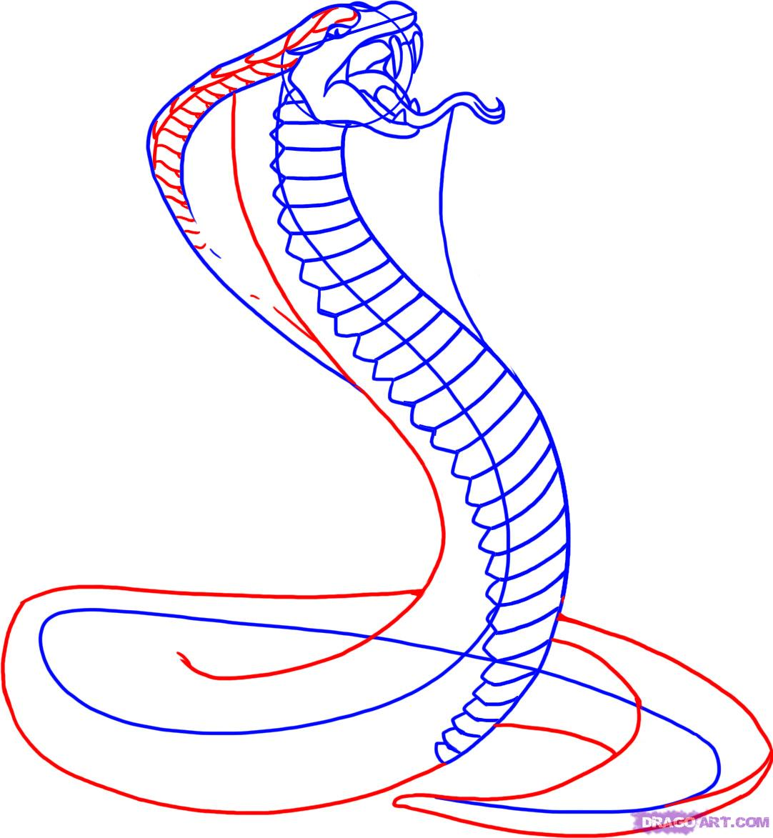 Drawn cobra Free How To Free Snakes
