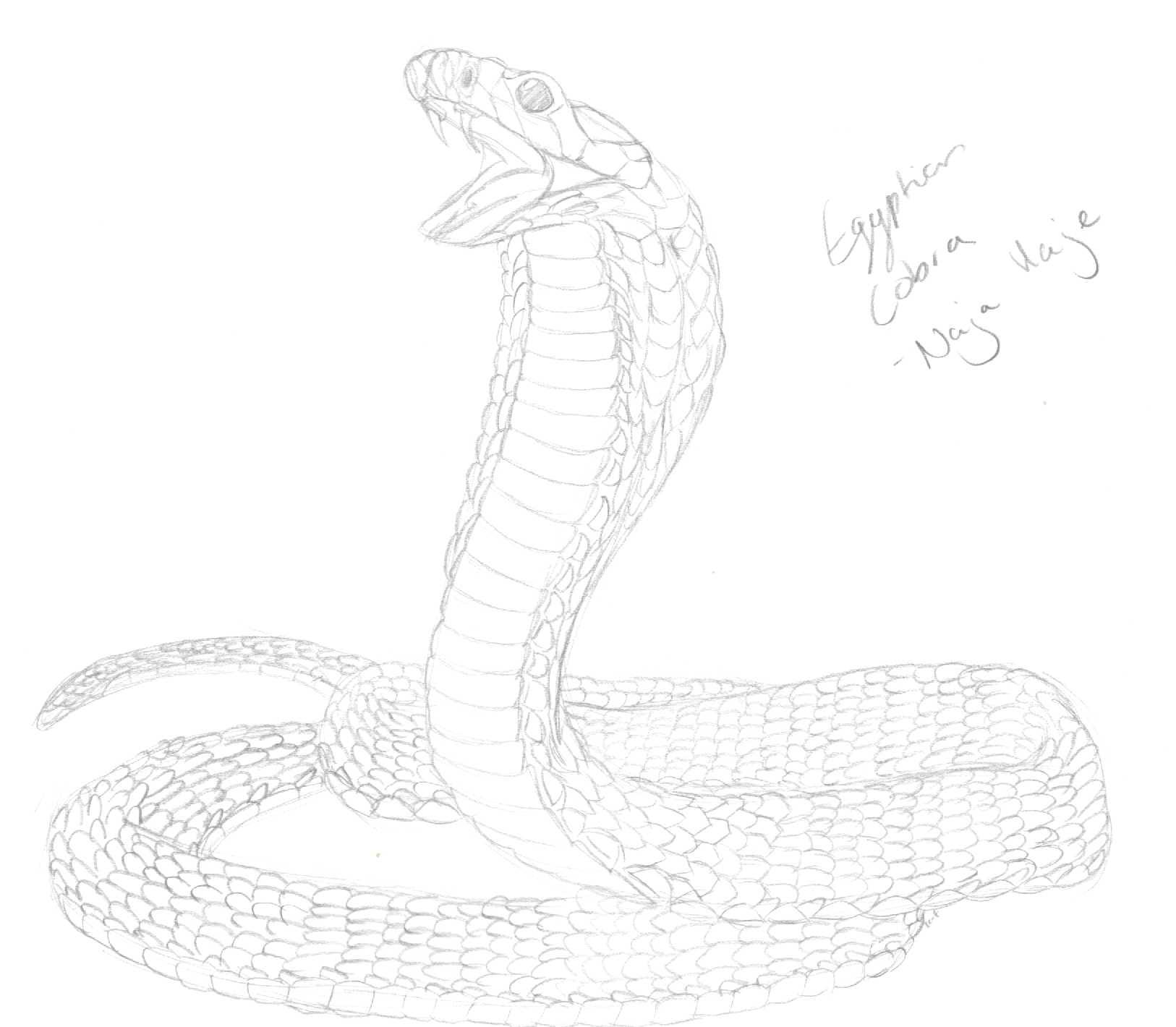 Drawn snake egyptian cobra DeviantArt Egyptian by Goddess Shadow
