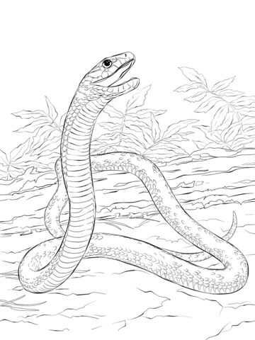 Black Mamba clipart simple Mamba of Black page to