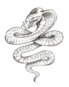 Drawn snake open mouth Ak0 https://s media  Tattoo