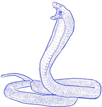 Drawn snake king cobra Cobra Step Step to by