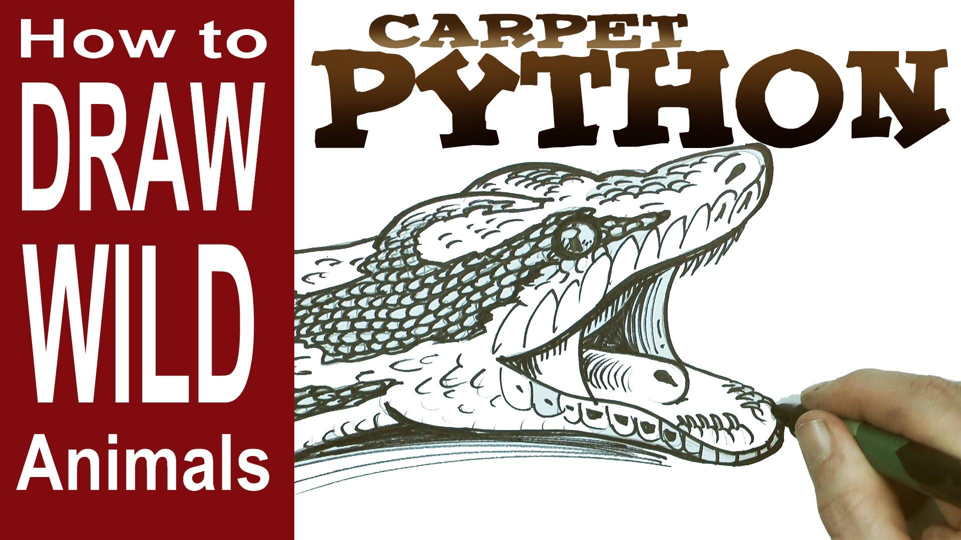 Drawn snake python snake Carpet How  a Python
