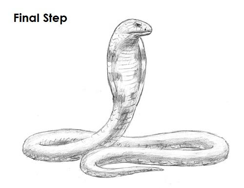 Drawn snake king cobra Draw (King Draw Cobra Snake