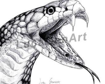 Drawn snake realistic Print pencil Art snake Cobra