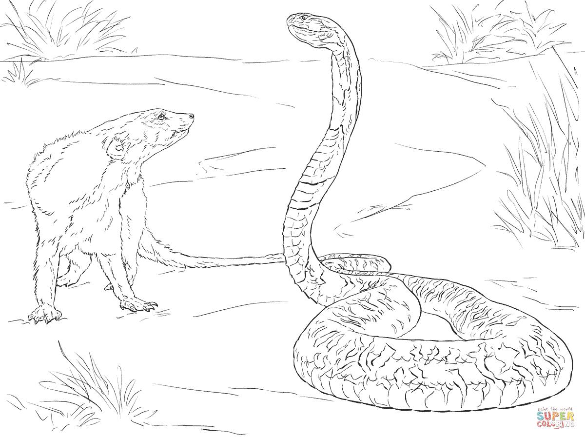 Drawn snake spitting cobra Coloring Mongoose Printable Mongoose