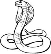 Drawn snake spitting cobra Free Coloring Pages King King