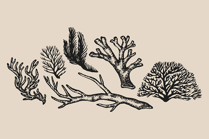 Drawn coral Classy in 4 Digital +