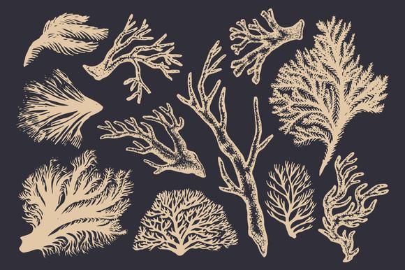 Drawn seaweed vector Coral Drawing Masteri & Seaweed