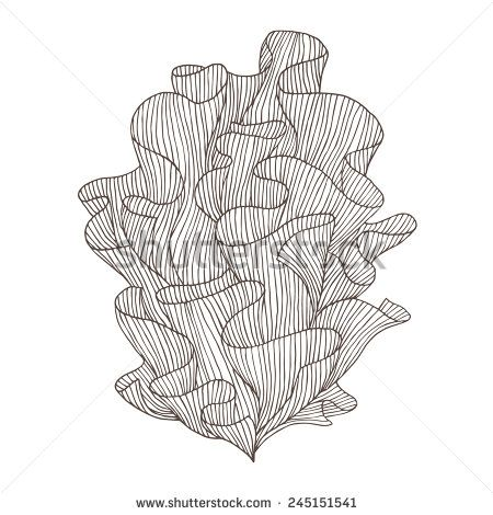 Drawn coral Decorative stock 25+ coral of