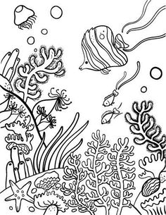 Drawn coral reef Draw  Coral pages kids