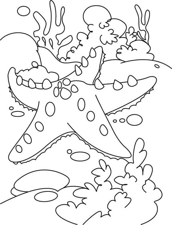 Drawn starfish underwater : Page Starfish Reef Coloring