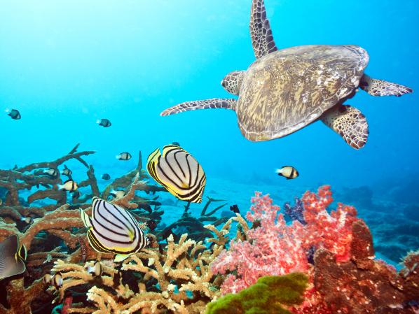 Drawn coral reef Choker as This kept at