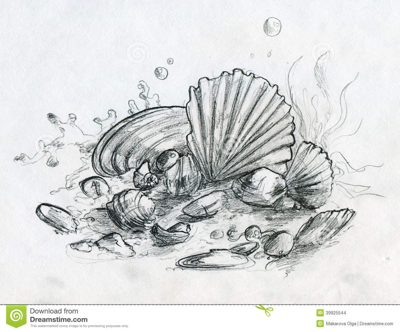 Drawn sea pencil drawing Sea Seashells On Shells Life